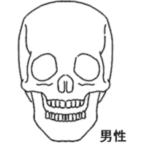 徹底検証!外国人と日本人!頭の大きさが違う!