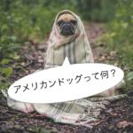 【新年ご挨拶】アメリカンドッグって英語で言える?